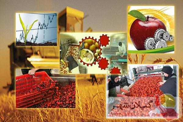 سهم ۴۱ درصدی بخش کشاورزی در صادرات گیلان و جای خالی صنایع تبدیلی