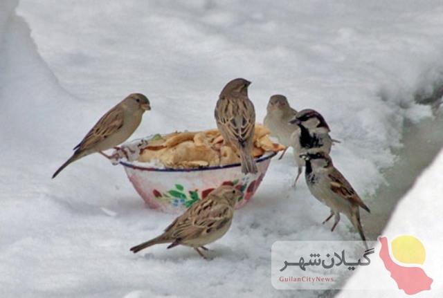 حمایت از حیوانات و پرندگان در روزهای سرد و برفی