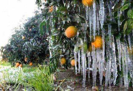 ساخت دستگاهی که با پرتاب هوای سرد مانع از یخزدگی محصولات کشاورزی میشود