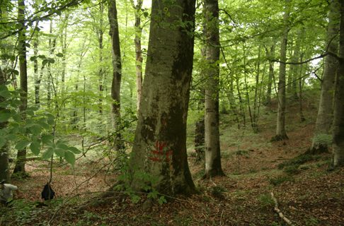 جنگلهای شمال هم دارد نابود میشود / تا ۳۰ سال آینده، جنگلی نداریم