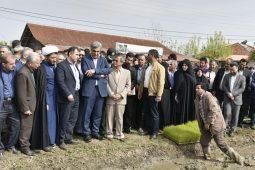 گزارش تصویری از  استاندار گیلان در  نخستین نشاء مکانیزه برنج