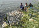 حمایت دولت از شرکتهای تعاونی پرورش ماهی