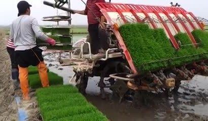 اعطای تسهیلات بانکی با سود ۱۵ درصدی به کشاورزان گیلانی