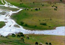 تخصیص اعتبار یکمیلیاردی جهت تقویت مراتع گیلان