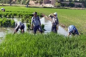 روند فروش اراضی کشاورزی گیلان افزایشی است
