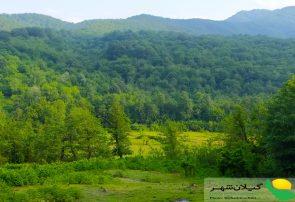 گزارش تصویری زیبایی بهار در گیلان