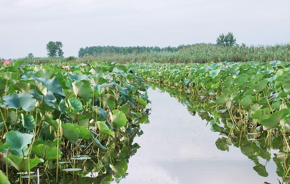 سند مالکیت تالاب انزلی به نام سازمان جنگلها صادر شد